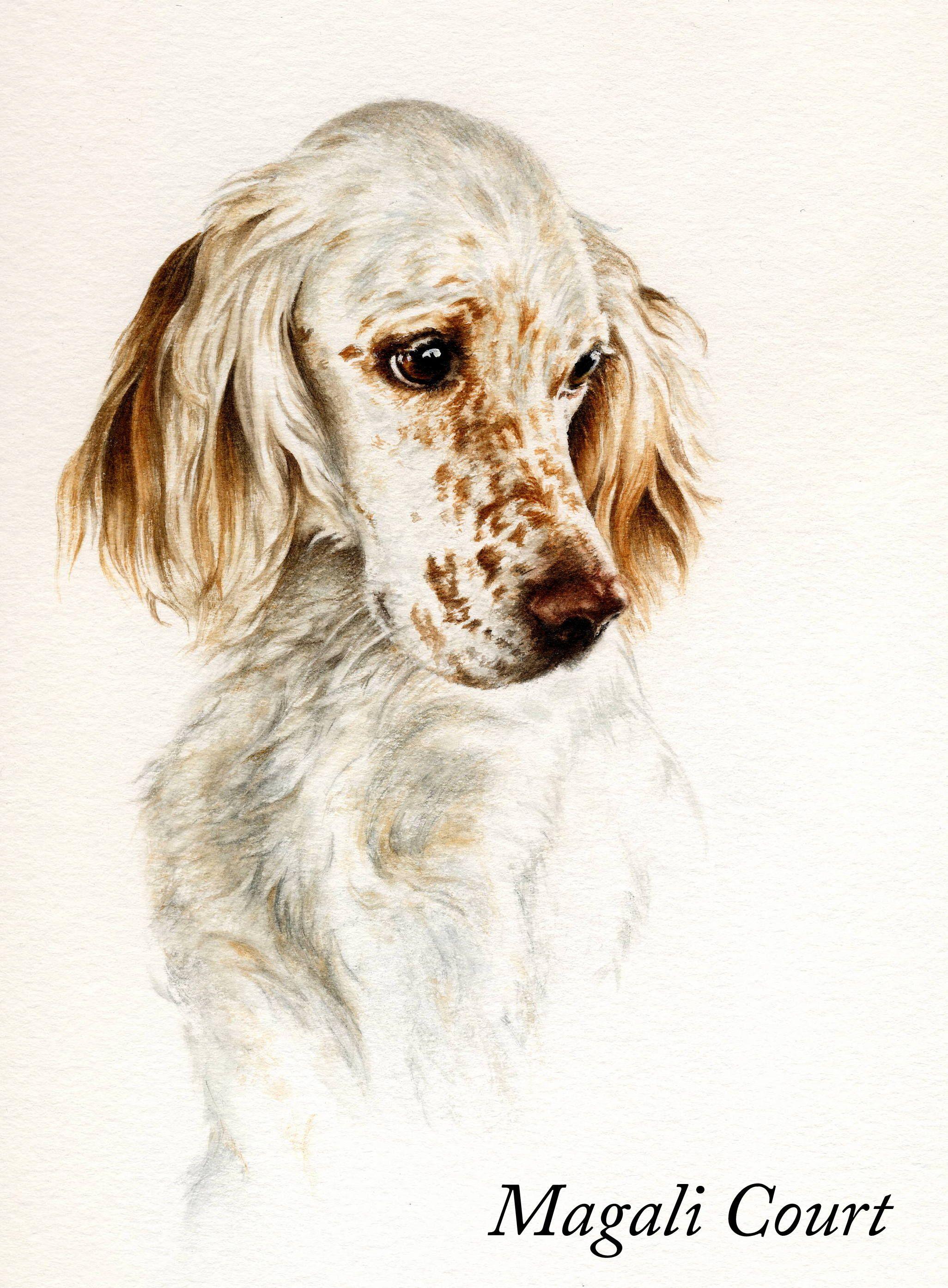 Aquarelle Setter Mc Puppy Art Dog Paintings English Setter Dogs