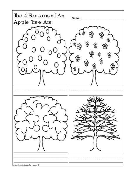 the 4 seasons of an apple tree are worksheet lesson planet kindergarten preschool apple. Black Bedroom Furniture Sets. Home Design Ideas