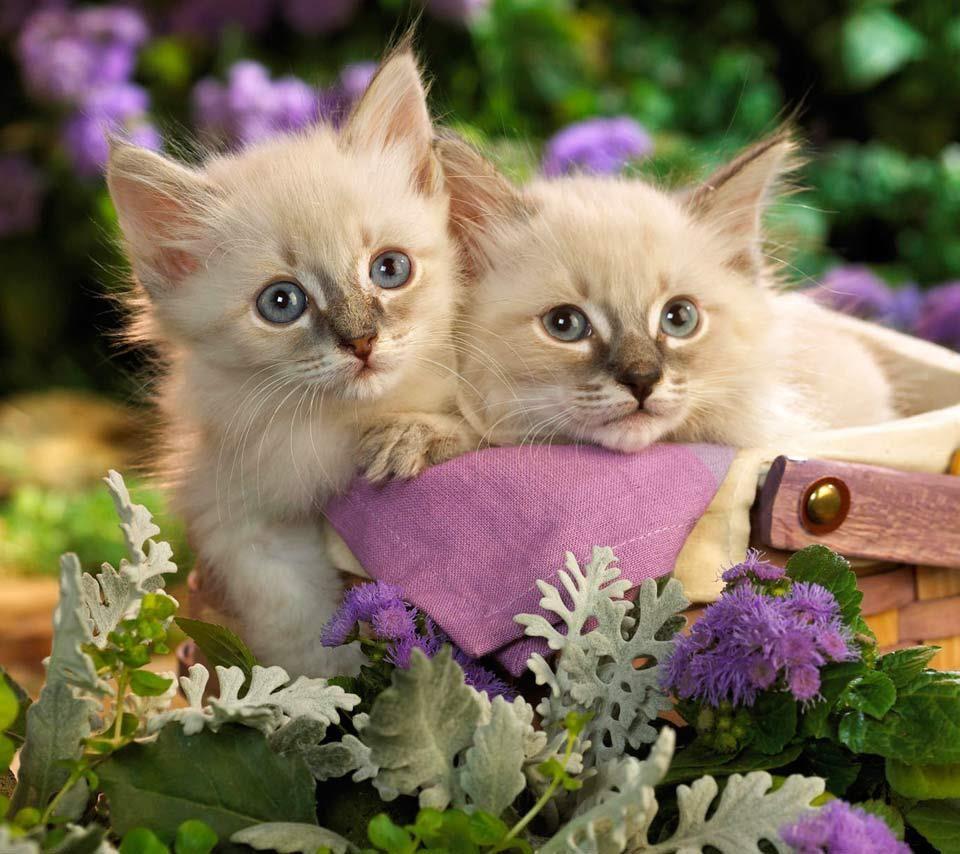 Épinglé par Carterie Coccinelle Créative C sur AN-Cats   Cute kittens, Chats adorables, Animaux ...