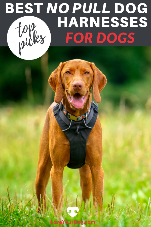 Best No Pull Dog Harnesses 2019 Ratings Reviews Dog Harness
