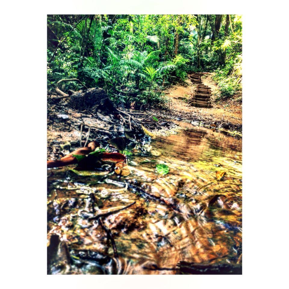 Uma parte da nascente do Pico do Jaraguá,Sp Brasil ®  #5511 #Sp #PicodoJaragua #Brasil #Natureza