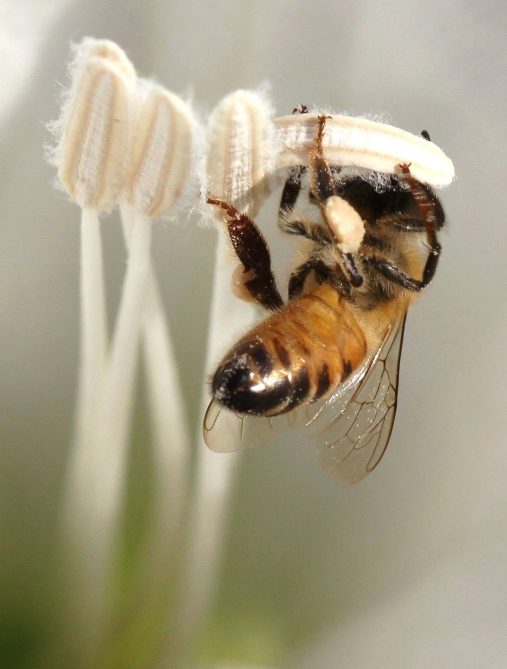 What Will Happen If Bees Become Extinct Bee Save The Bees