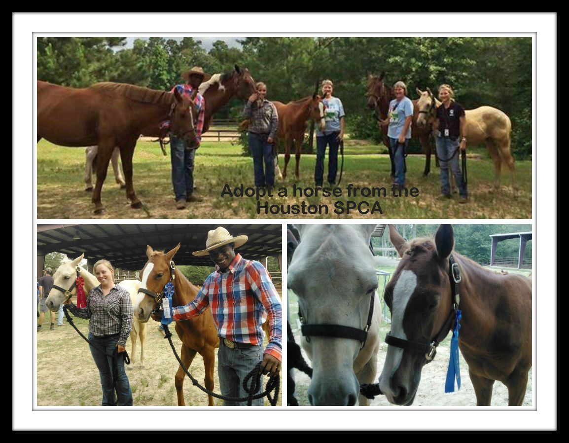 The Houston Spca Barn Team Took A Road Trip To The Banshee Ranch Horse Show Over The Weekend And Brought Some Of Ou Horses Healthy Horses