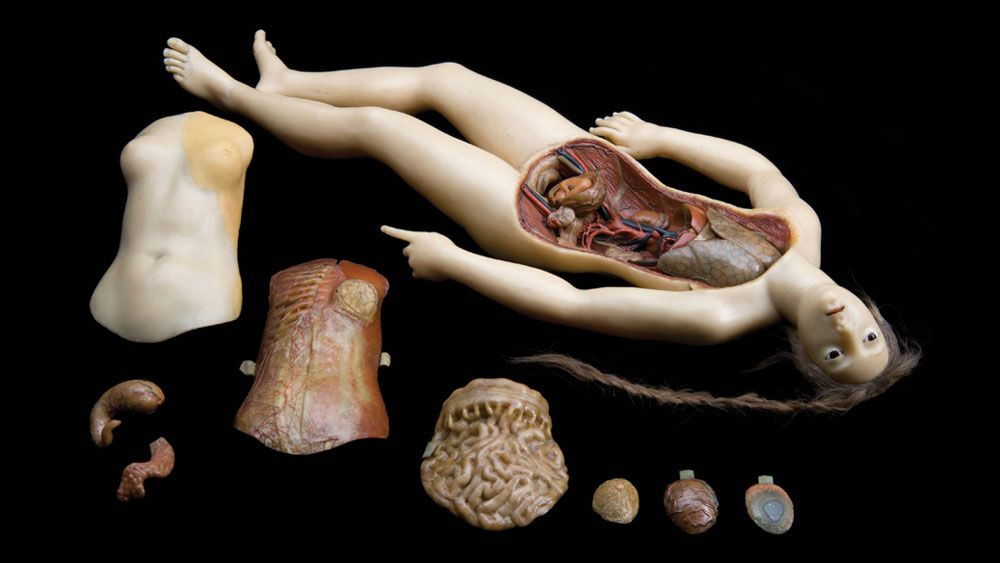 Fantastically Creepy Images And Tales From The Morbid Anatomy