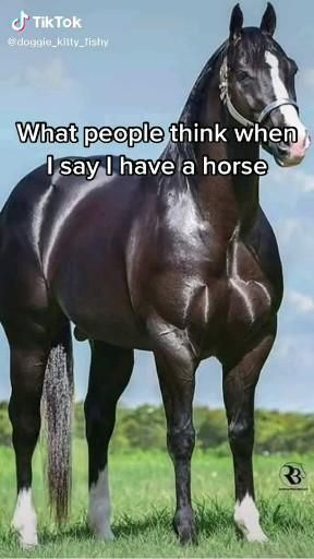 Pin By A Cute Person On Funny Memes Video Funny Horse Memes Funny Horses Funny Horse Videos