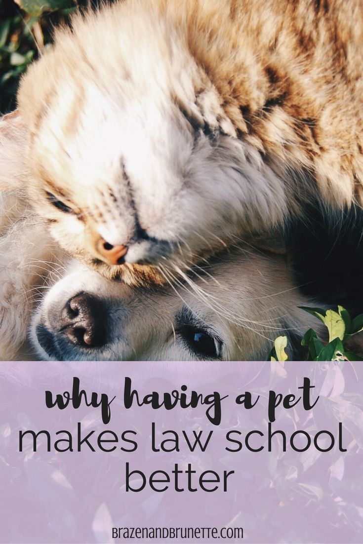 8 Reasons To Get A Pet In Law School How To Have A Pet In Law School Do You Have Time For A Dog In Law School 8 Reasons To Get A D