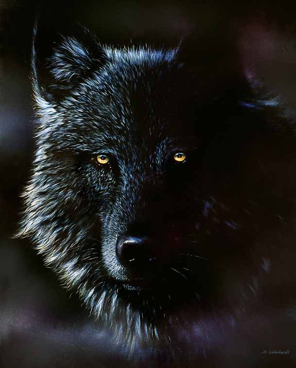 Black Wolf If You Look Close
