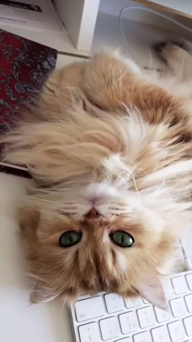 Pin By Moj Profil On Furry Friends Pretty Cats Cute Cats Crazy Cats
