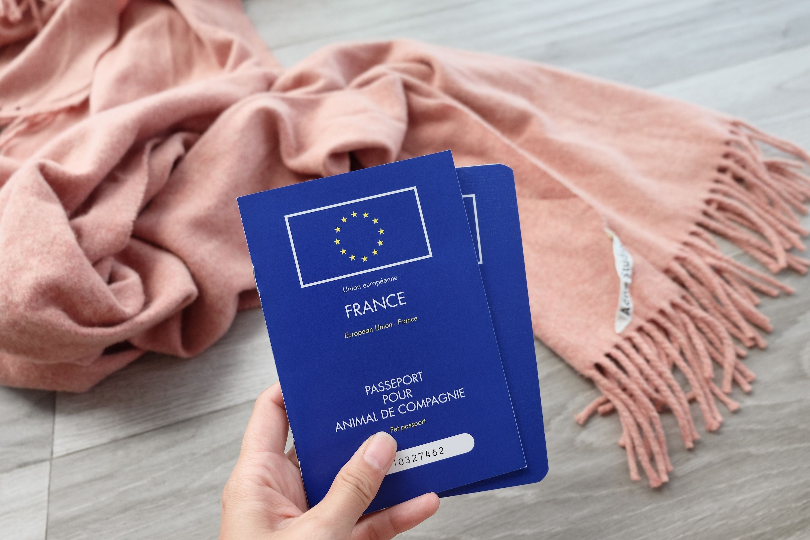 What You Need To Know About Pet Passports (With images