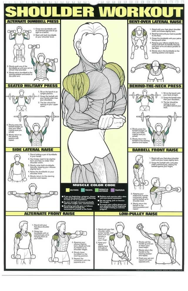 The Absolute Beginner's Guide to Exercise Shoulder