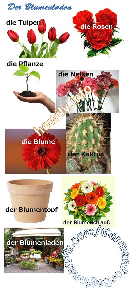 Flowers  Deutsch
