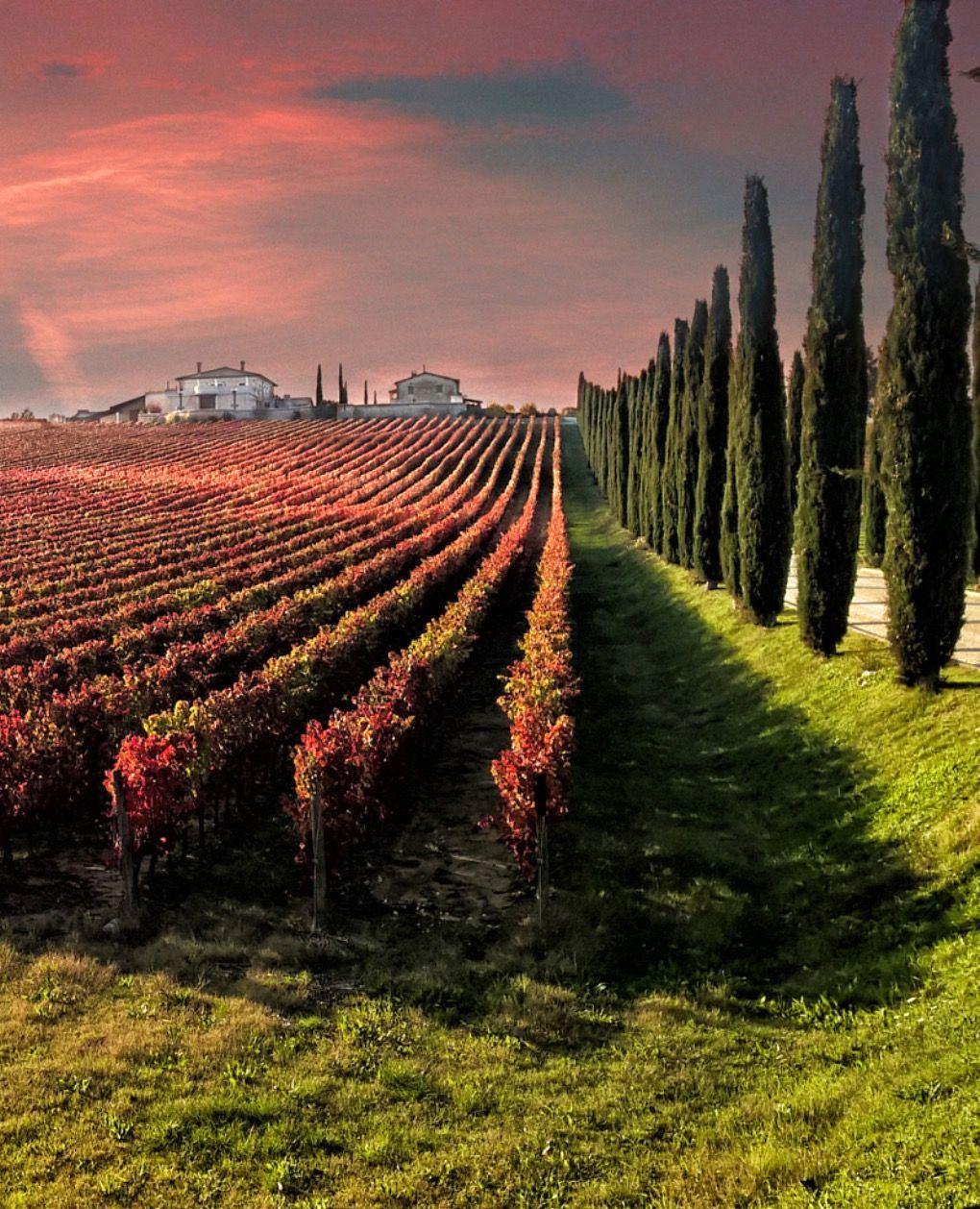 Vineyard by Giuseppe  Peppoloni (Italy)