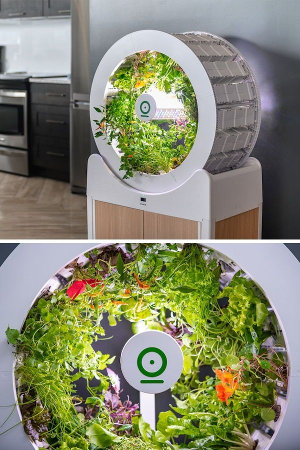 Innovative Self-Watering Indoor Garden Grows 90 Fruits and Veggies at a Time #selfwatering The OGarden Smart is a self-watering indoor garden that can grow 90 fruits, vegetables, and herbs at one time. #selfwatering