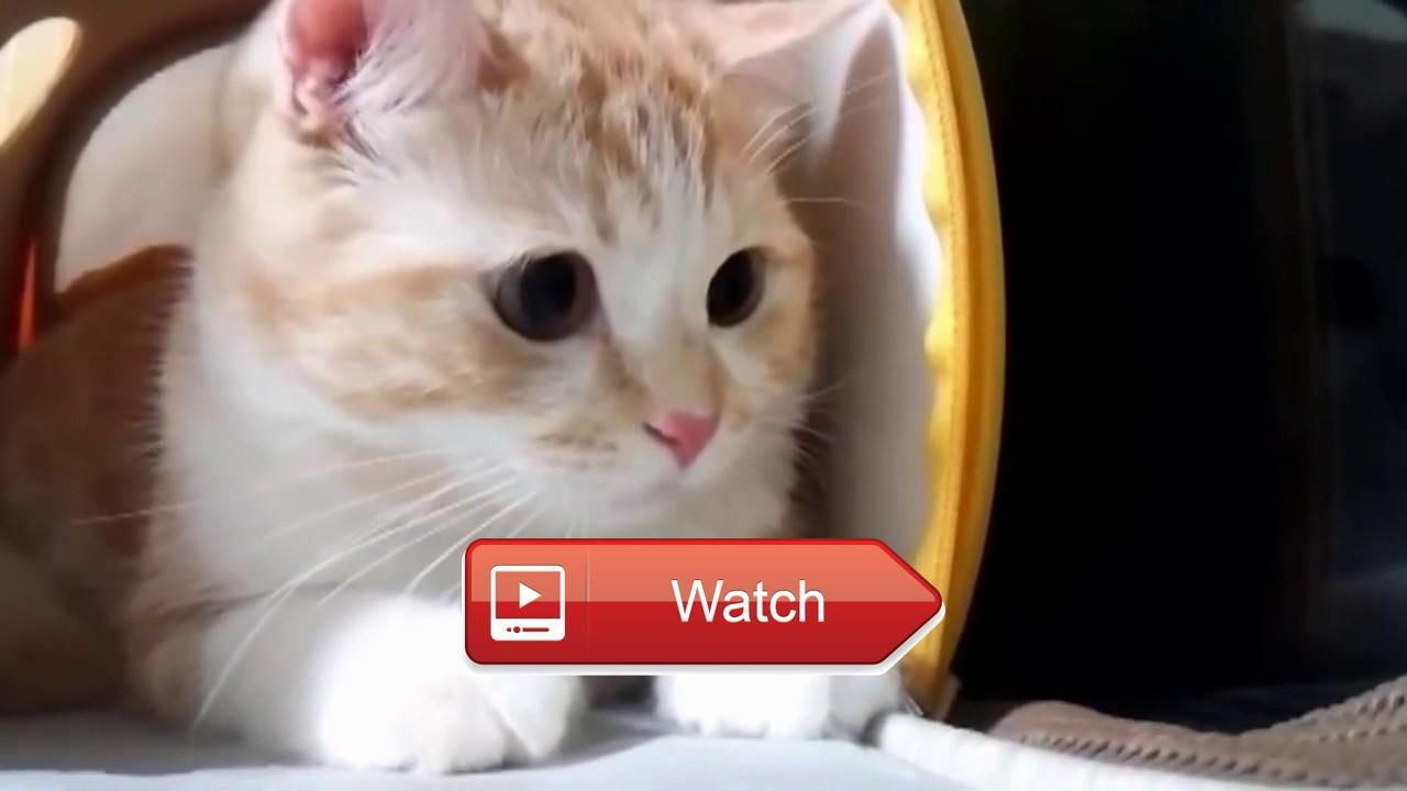 Uncategorized Really Funny Cat Videos funny cat videos cats compilation top must watch watch