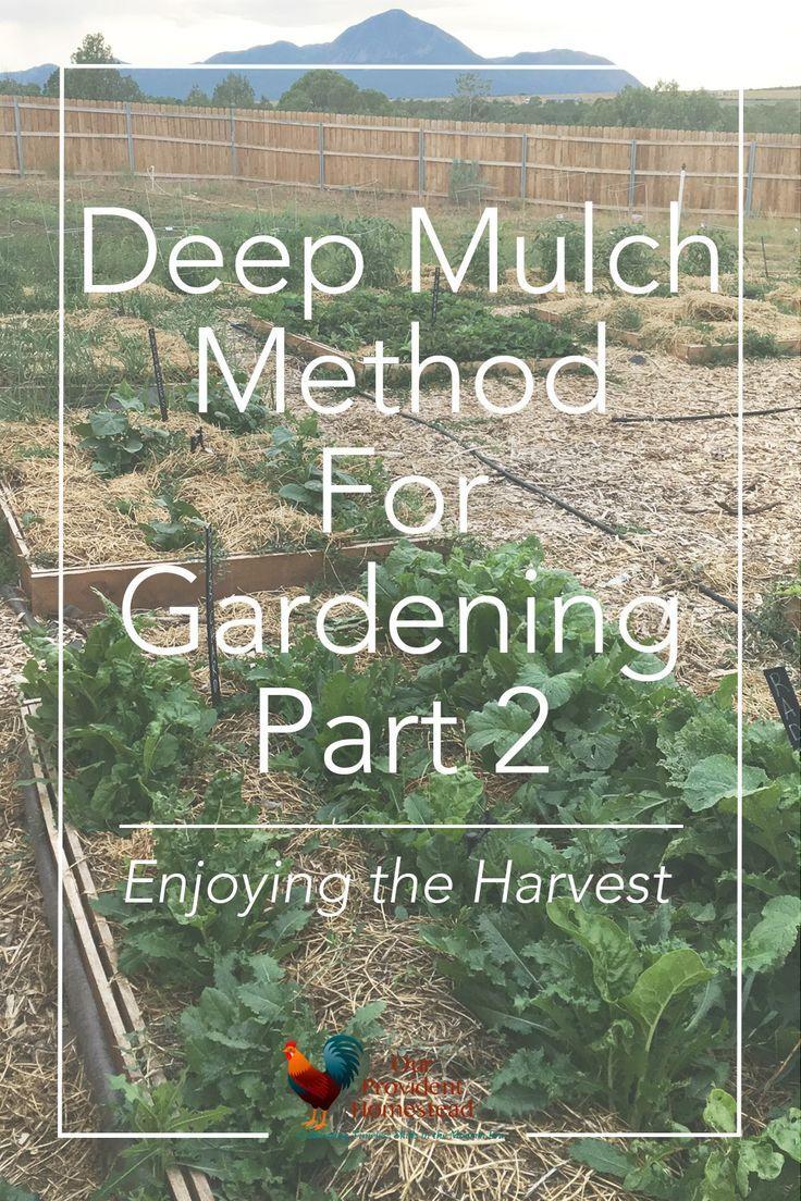 deep mulch gardening, deep mulch method for gardening: the results | pinterest | enemies, Design ideen