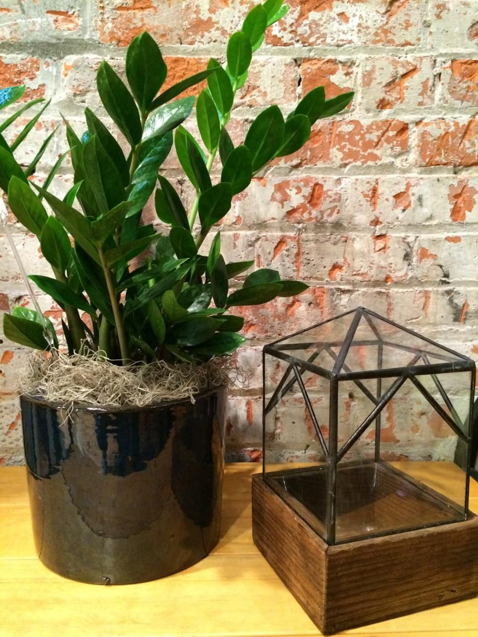 How To Design With Plants Indoors Plants For The Home