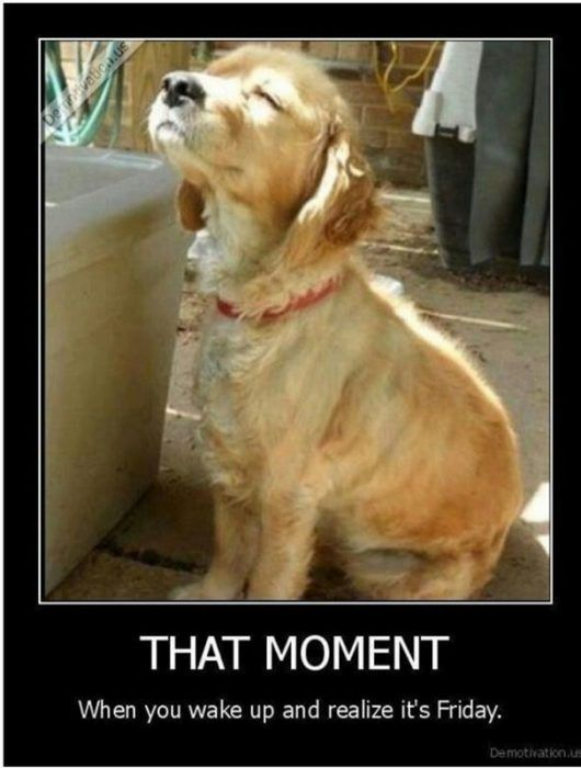 Funny and Happy Friday #friday #quotes #humor Dogs say or think the darndest things. Here are some possible thoughts your dog may have. doggie | dogs | puppies | dog training | dog breeds | funny dogs | dog food | dog accessories #dogs #doggiemojo #fridayquotes