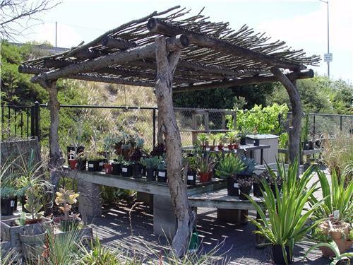 Pin By Heather Sanchez On Garden Rustic Pergola Pergola