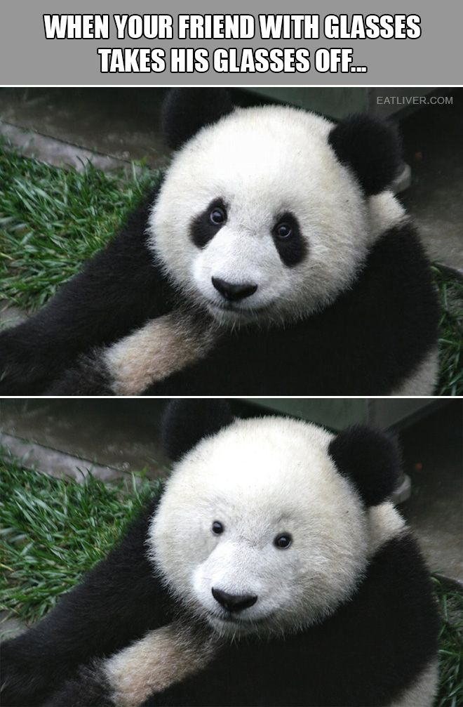 When Your Friend Takes His Glasses Off Panda Funny Cute Funny Animals Panda Bear