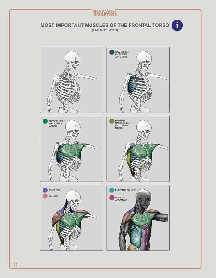 Pin de dario diaz en figura humana   Pinterest   Anatomía, Figuras ...
