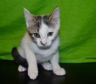 Foursquare has been adopted!