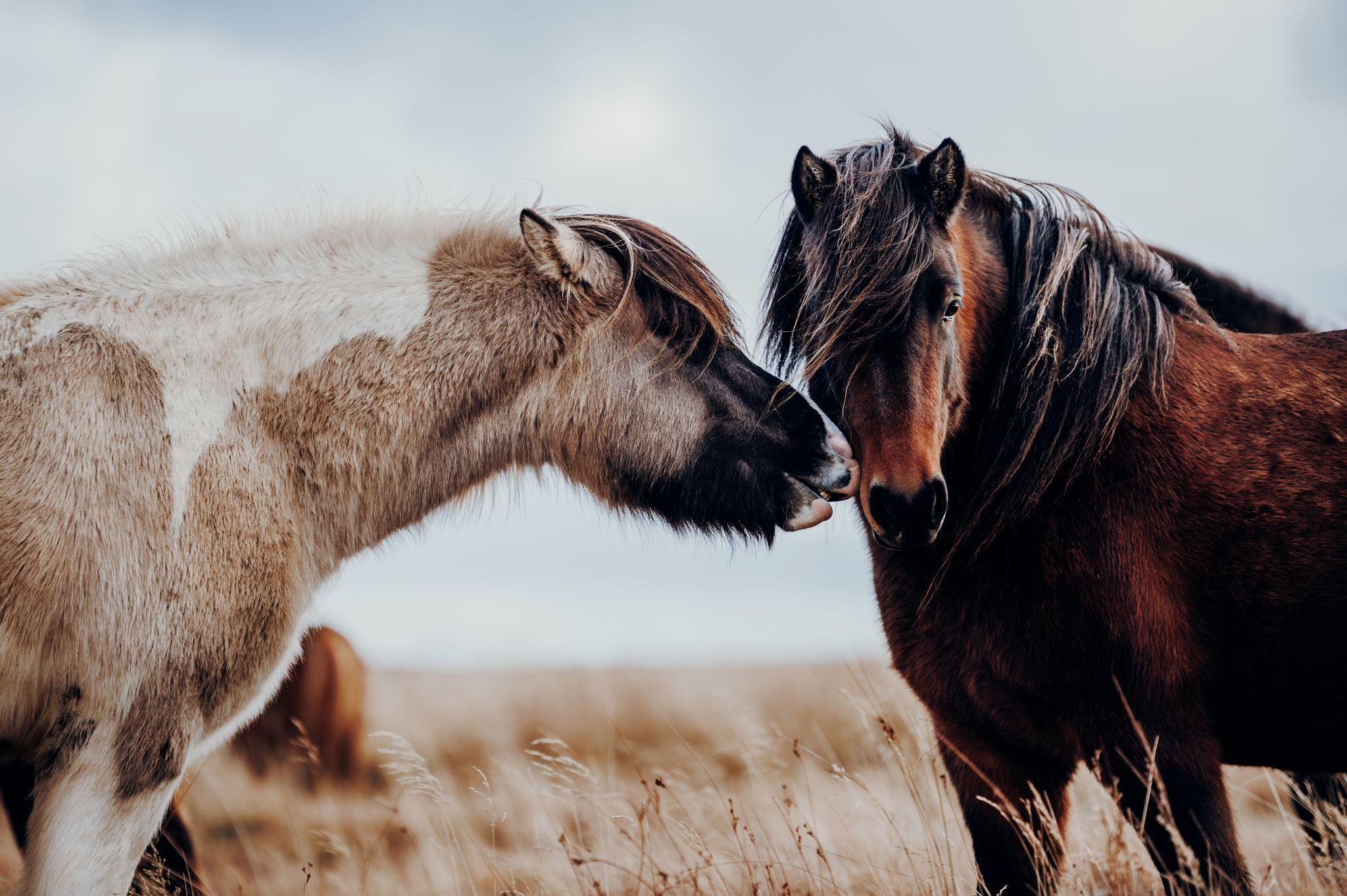 Fotos Pferde In Der Natur I Pferde Pferde Fotografie Schone
