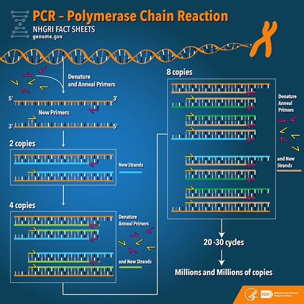 Pcr Has A History Of Amplifying Its Game Molecular Biology