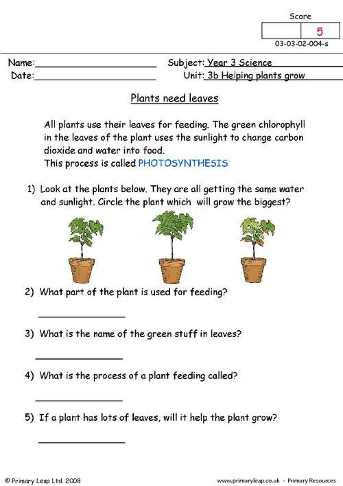 Translations Into Italian: PrimaryLeap.co.uk - Plants Need Leaves Worksheet