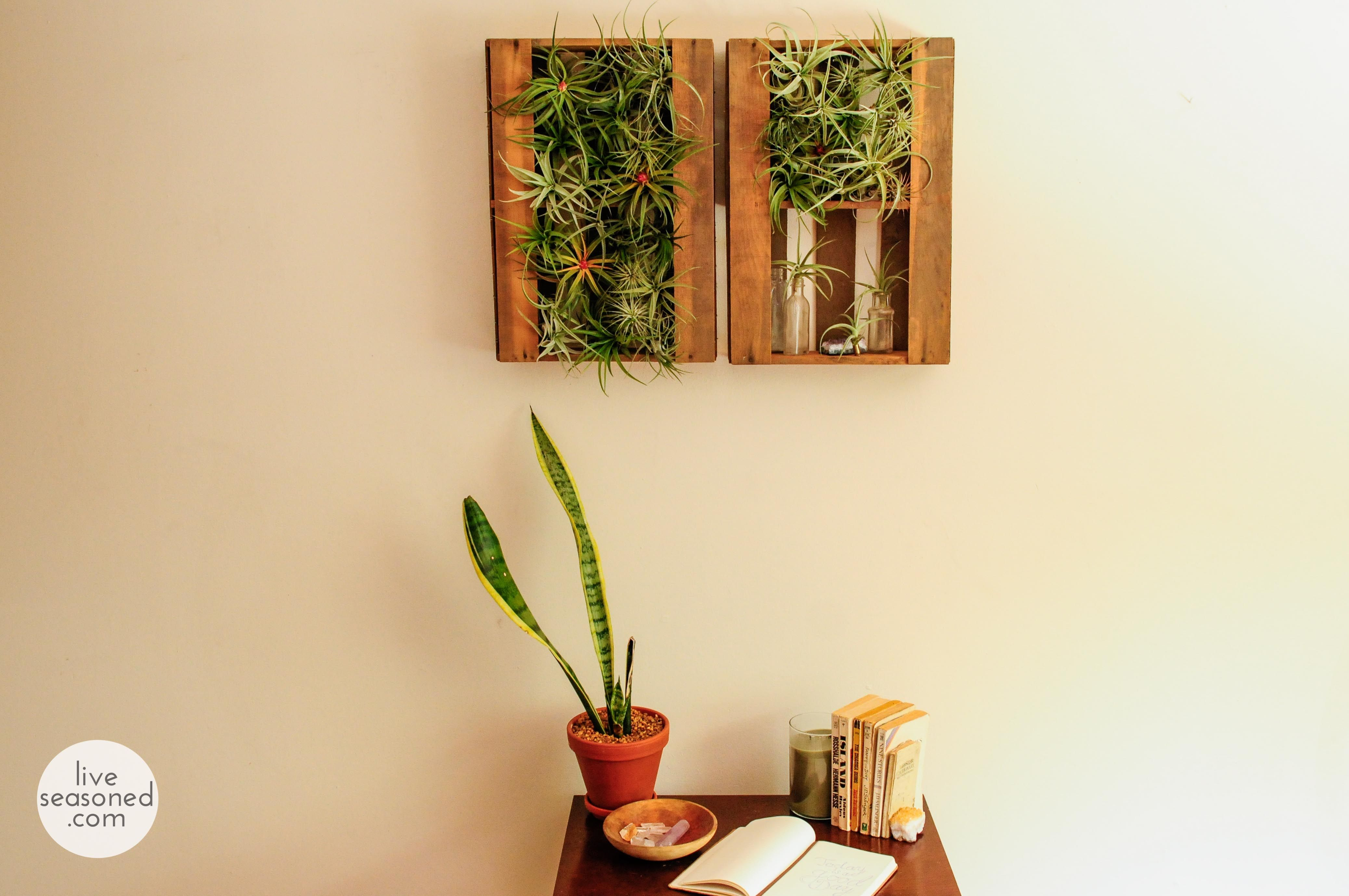 Learn a cheap and easy way to display a big group of tillandsia air ...