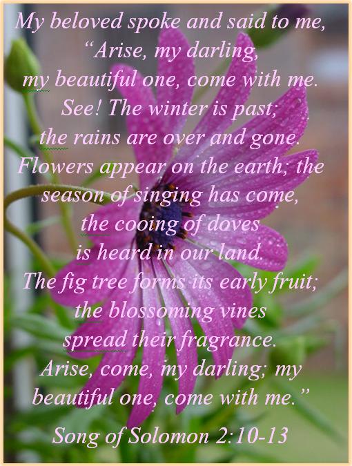 Image result for Song of songs 2:13  kjv gif