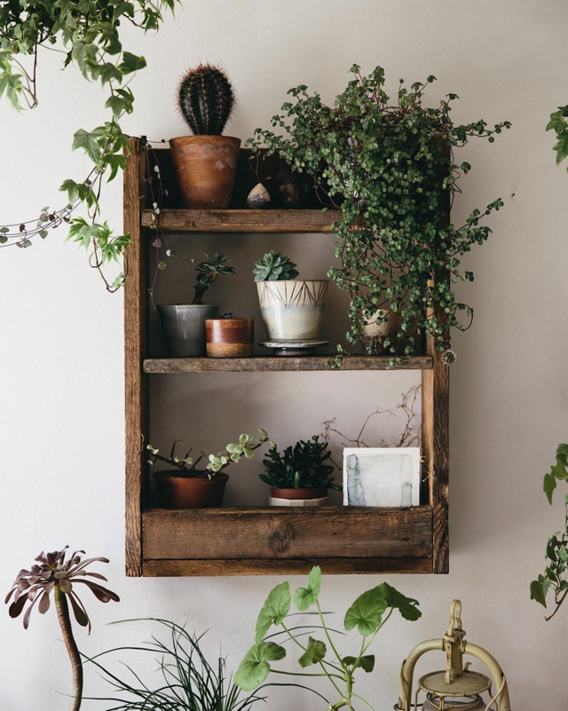 Filling A Space With Plants And Arranging Them On Rustic Pallet Wood Shelves Creates Such Warm Modern Bohemian Living