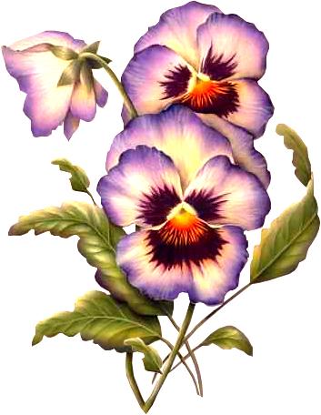fleurs des pensees pintura pinterest pansies flowers and art flowers. Black Bedroom Furniture Sets. Home Design Ideas