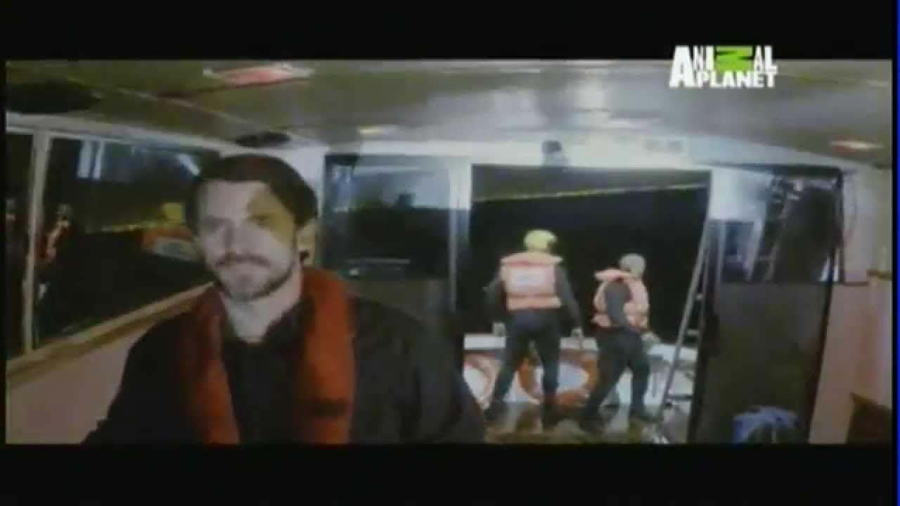 Documentario Do Enorme Tubarao Submarino Documentary Huge