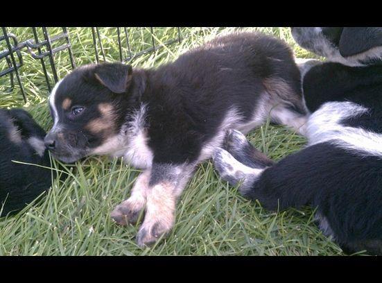 Ksl Com Classifieds Photo Viewer Cute Animal Pictures Cute Animals Animal Pictures