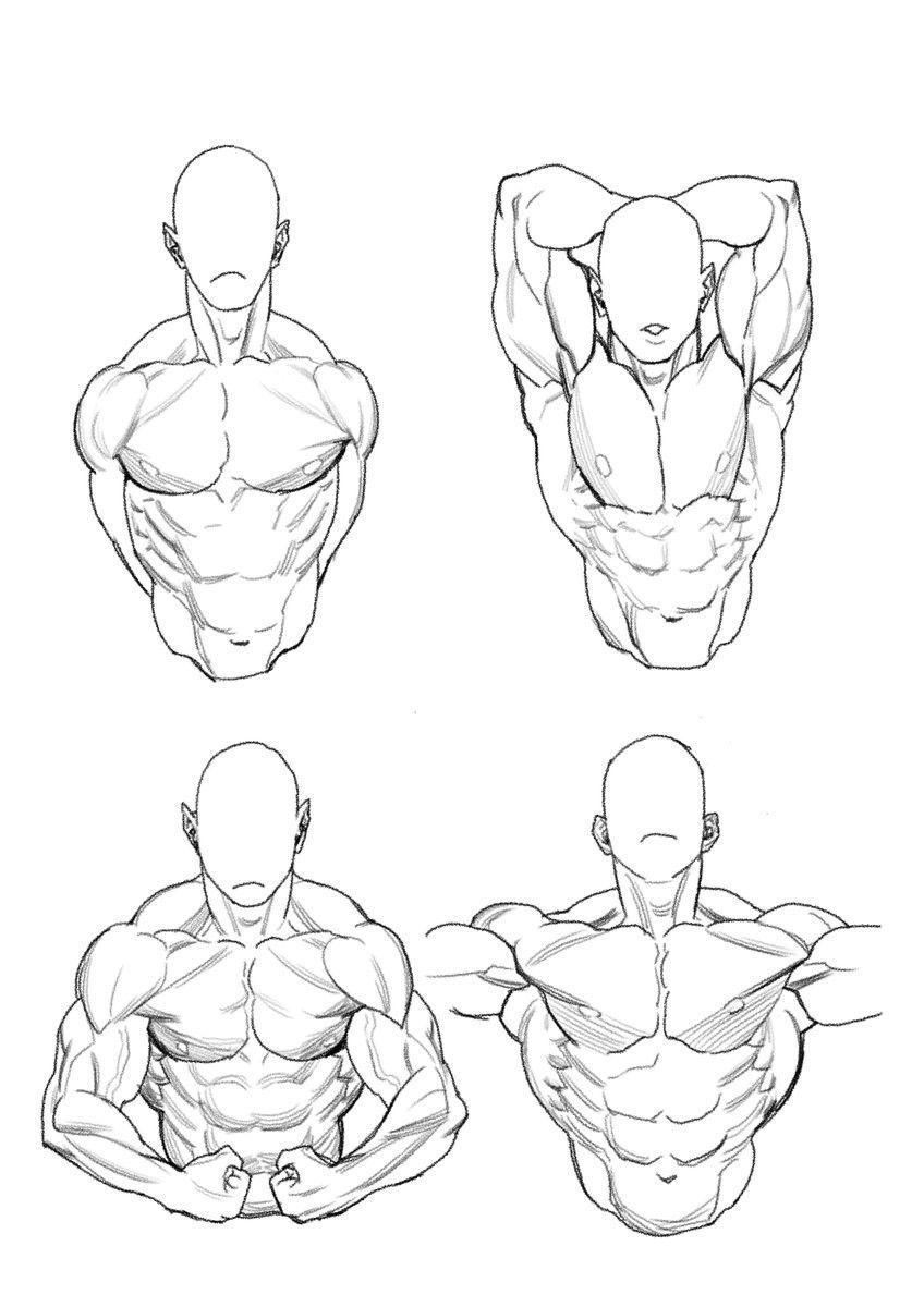 Human Figure Male Torso Sketch Poses Art Reference Poses Anatomy Art Figure Drawing Reference