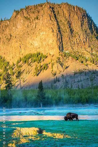 Yellowstone National Park (Best Honeymoon Destinations In USA) 5