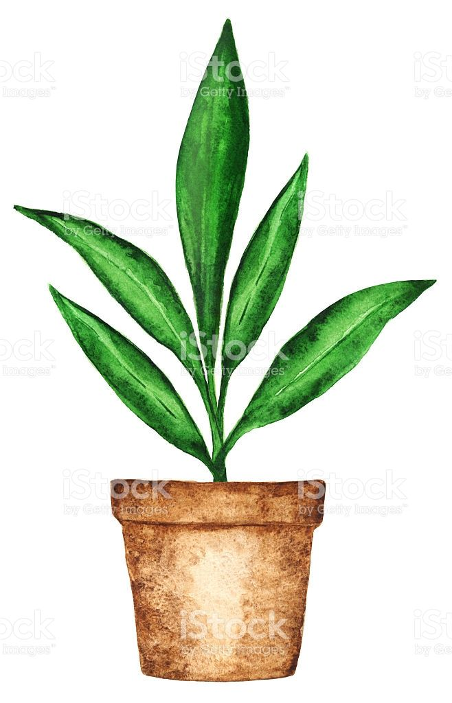 Watercolor Houseplant Sprout Green Leaves In Flower Pot Closeup Dessin Plante Illustration Cactus Pot De Fleurs