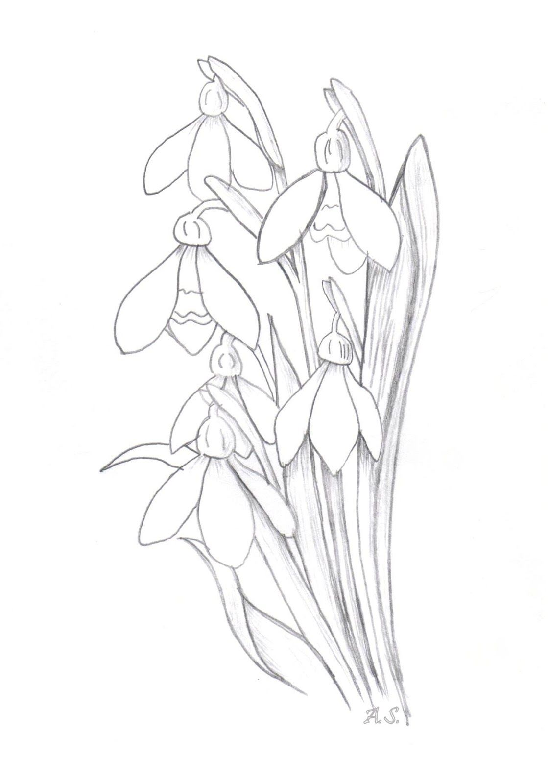 Uncategorized How To Draw Big Flowers how to draw snowdrops google search drawing flowers search