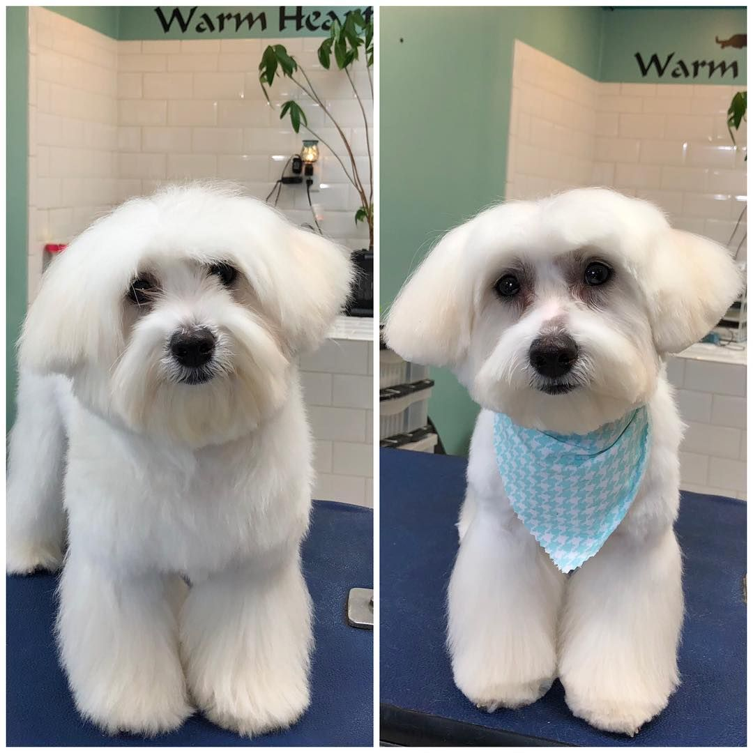 It S Always A Paw Riffic Day At Dogwood Grooming Spa In Knoxville
