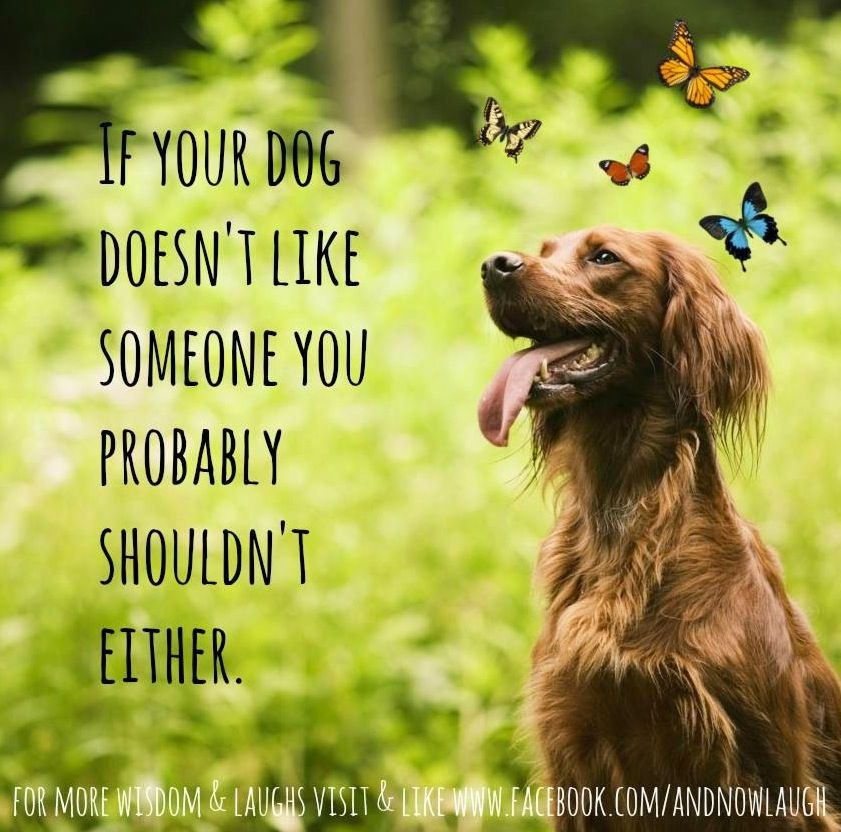 My Dog Loves Me Quotes: Haha But My Dogs Love Everyone! I Guess That Should Make