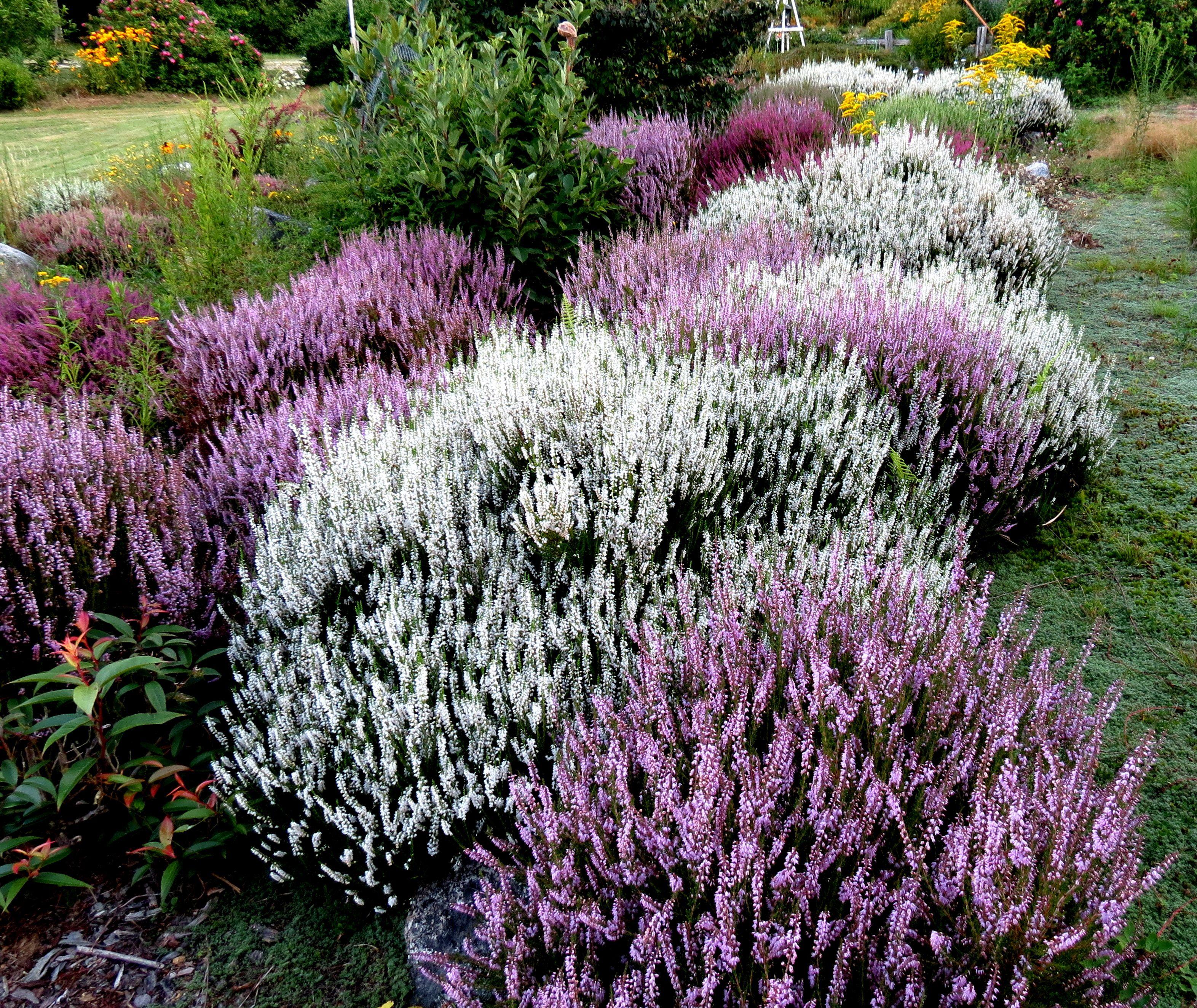 heather gardens garden