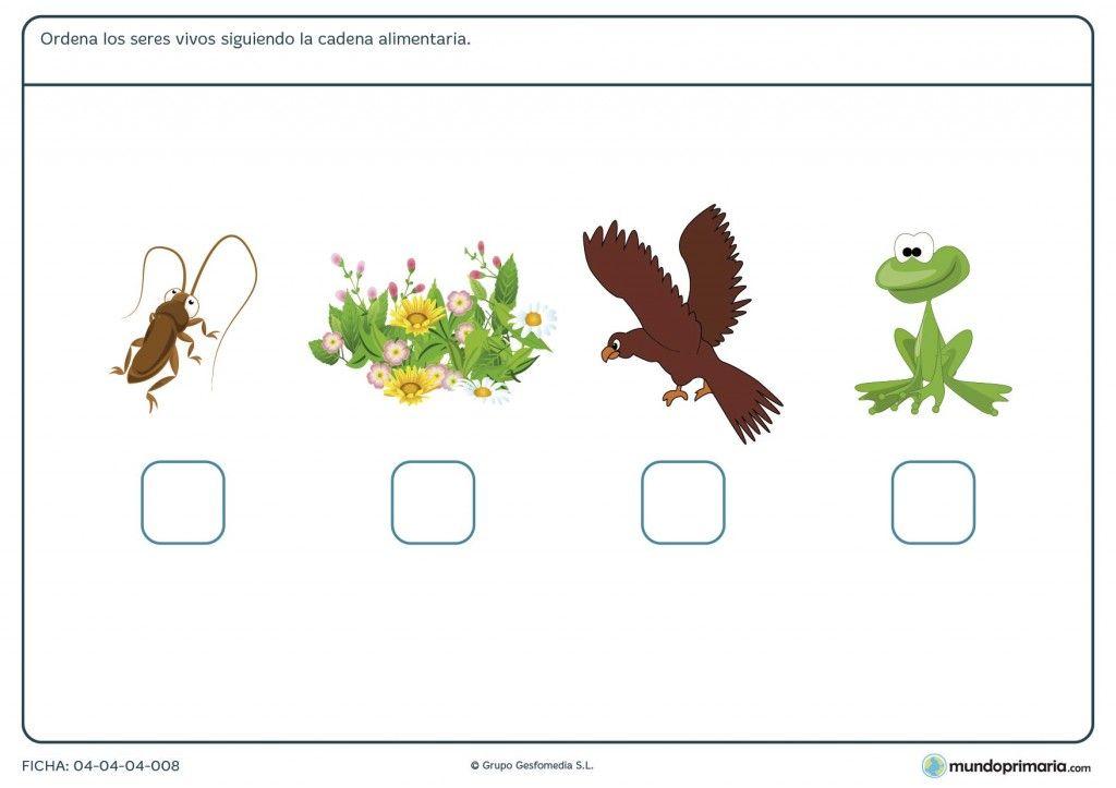 Fichas Para Imprimir Para Niños De Primaria Actividades Cadena Alimentaria Ciencias Naturales