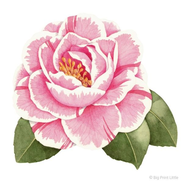 Camellia Flower Tattoo Big Print Little Camellia Illustration For House Watercolor Flowers Paintings Flower Tattoos Flower Drawing