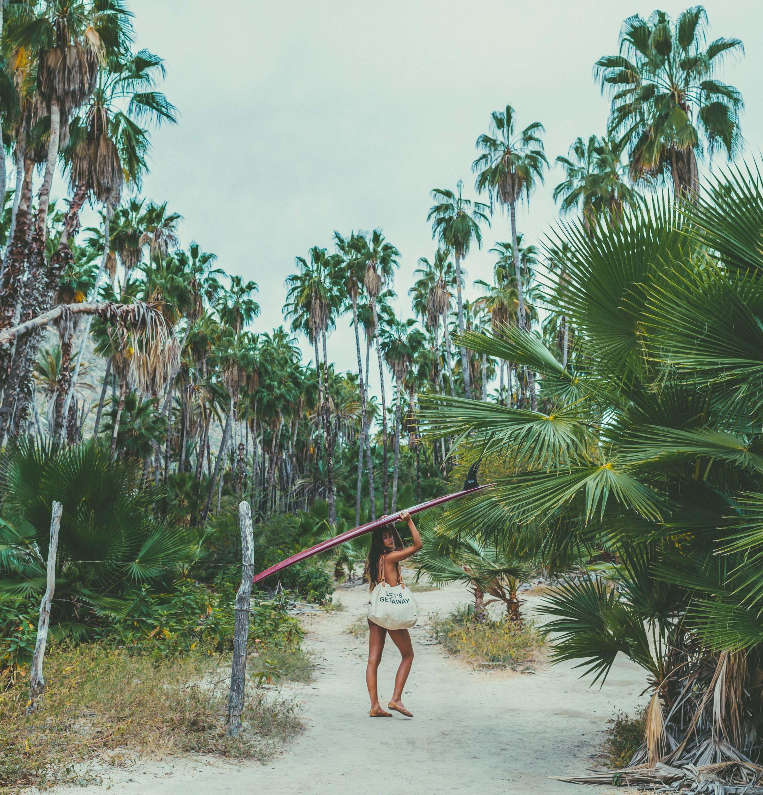 Palm Tree Island: Island State Co Island Life Inspo