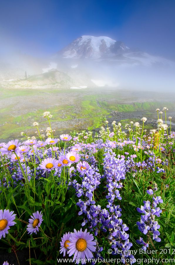 Lovely Alpine Meadow (Mt Rainier, Washington)