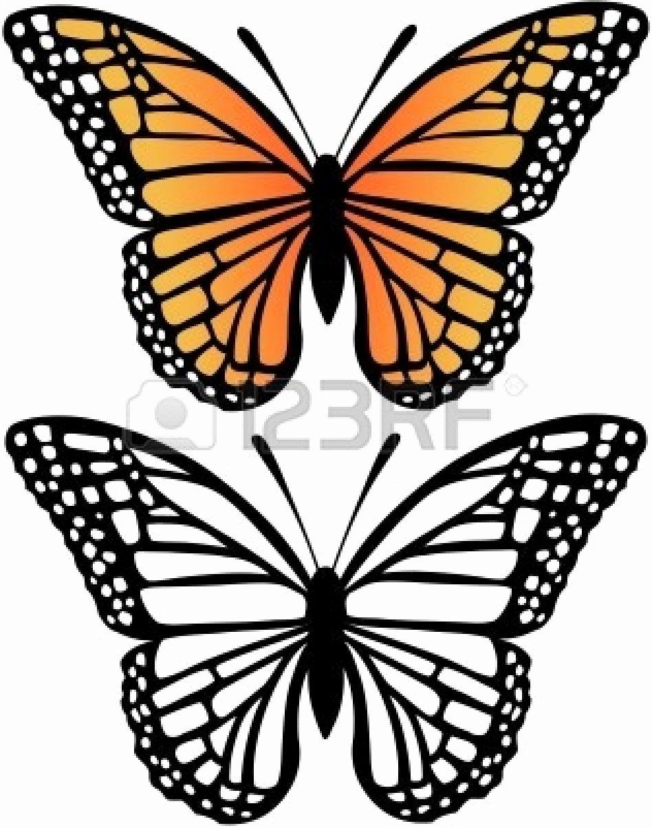 Monarch Butterfly Coloring Page Fresh Free Monarch Butterfly Drawing Download Free Clip Art Free Butterfly Coloring Page Butterfly Artwork Butterfly Pictures [ 1203 x 948 Pixel ]