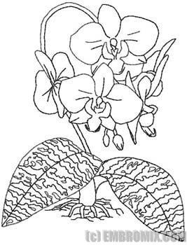Applique Orchid Pattern Appliq Patterns Orchid Drawing Flower