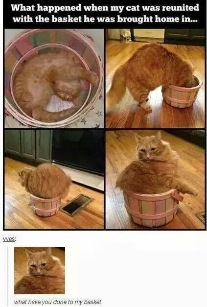 I USED to fit ? What is going on here ? This is so strange !! If I fits I sits and I sat, now I don't fit so can't sit !! Oh shit !!!