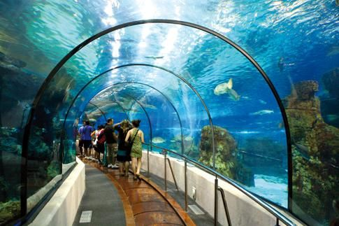 Now browse through our website and let us know if you want us to hire family fun activities in Melbourne. Our aquarium centre is there to enthrall you. We arrange free parties for your kids. Contact us today!