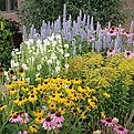 Pre-Planned gardens. Water-wise perennials for the long hot panhandle summer!!